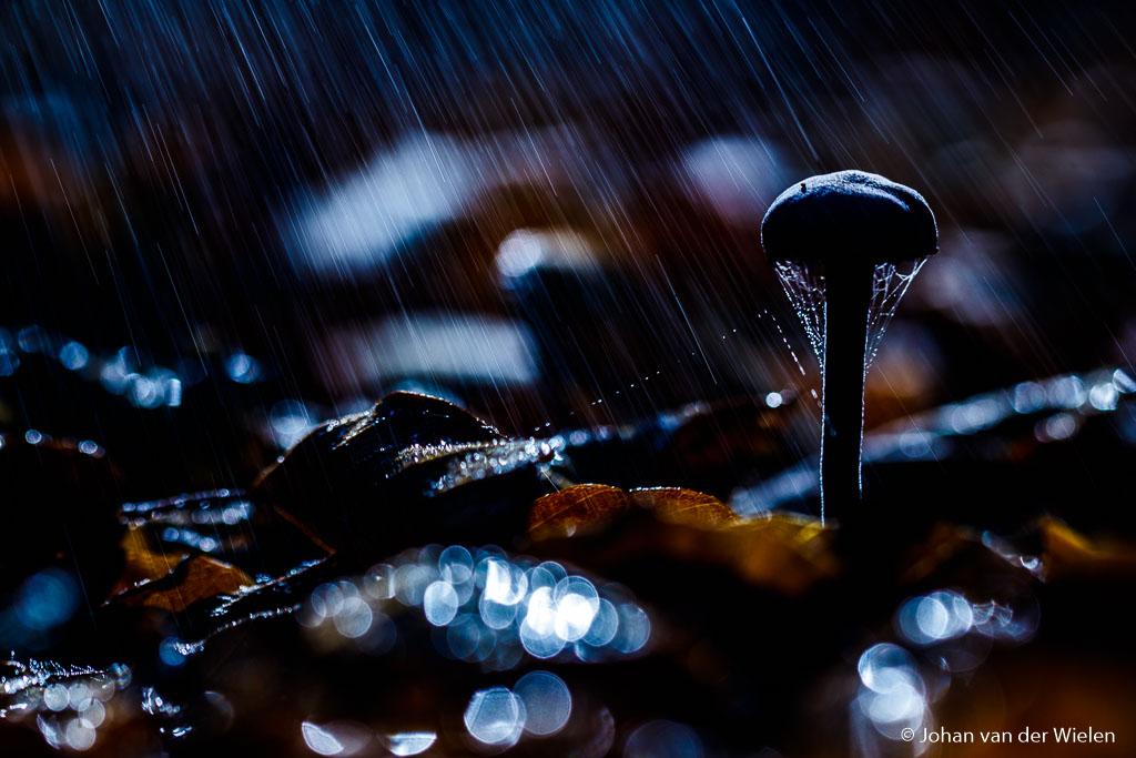Amethiszwam in de regen