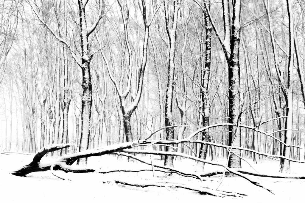 abstract zwart wit beeld van winterse bomen en besneeuwde boomstammen