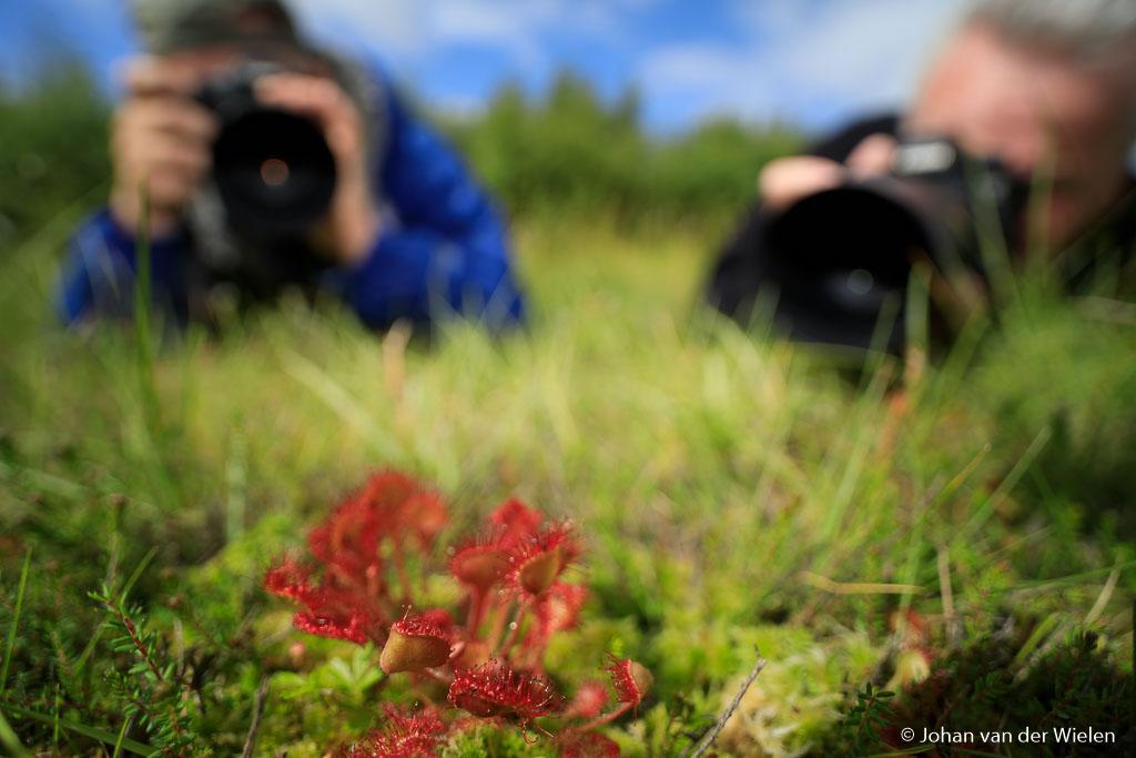 Op enkele plaatsen komt het zeldzame vleesetende plantje zonnedauw voor.