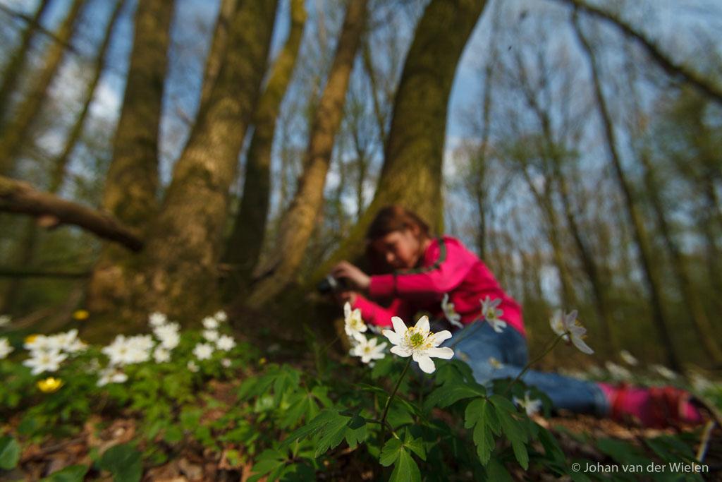 meisje druk bezig met zelf fotograferen van de bosanemonen; girl busy photographing the wood anemones
