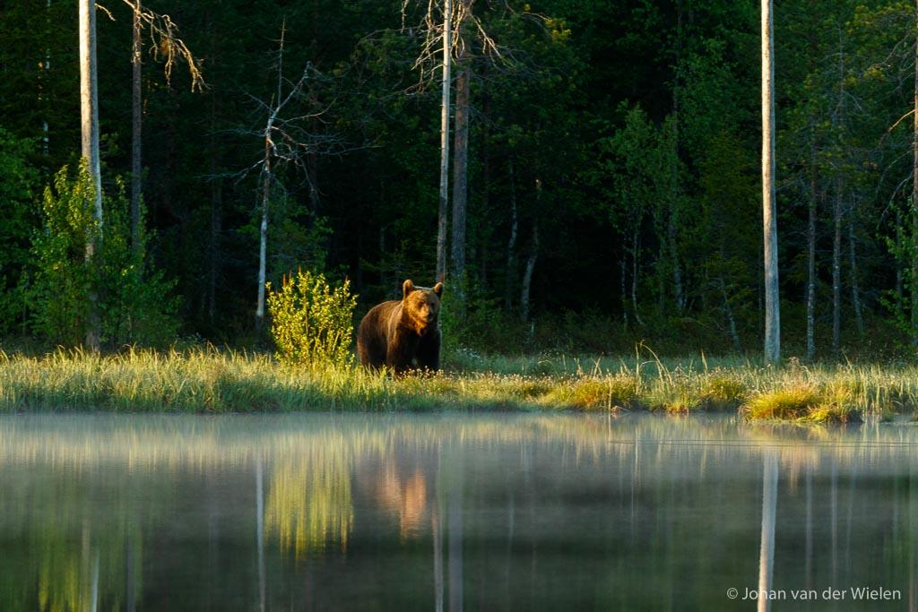 zonsopkomst, water en ochtendnevel... gelukkig was er nog een beer