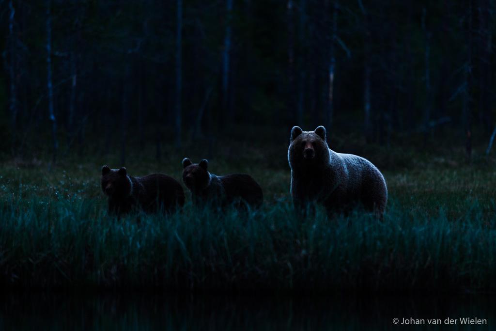 de ultieme belevenis, in het pikkedonker komt moeder met jongen in het maanlicht langssluipen