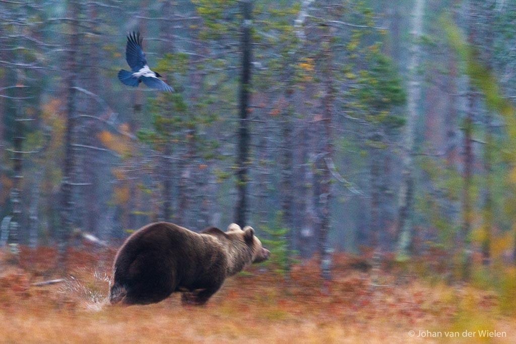 van het geratel van 10fps met terugslag schrikt zelfs een beer nog wel