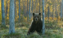 dé kick van de beer die losgaat: houding, de vallende druppels , het perfecte licht