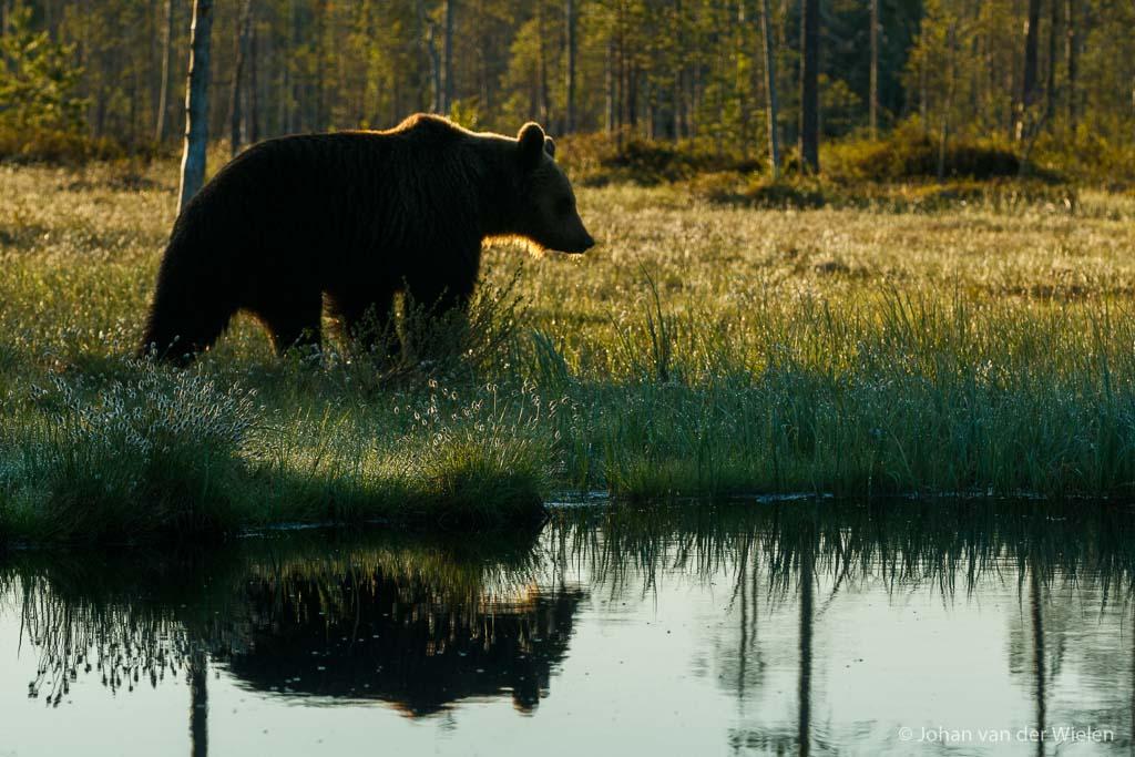 vol creatieve fotografische 'jongen' komt Johan uit zijn zomerslaap... de beer kan weer los!