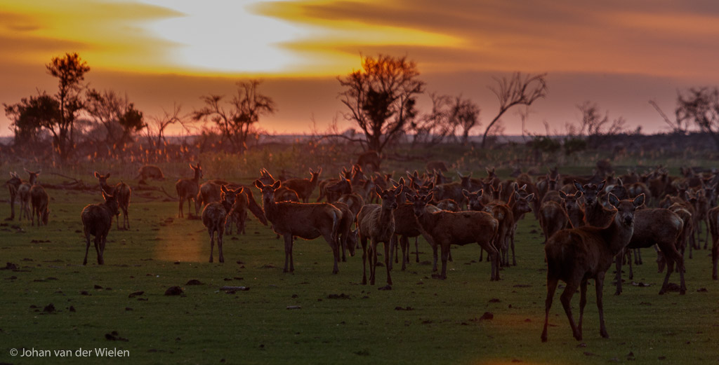 Serengeti in Nederland