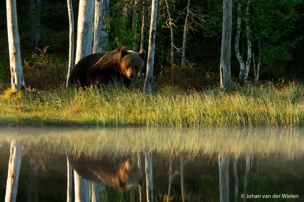 Fotografiereis Finland Wildlife
