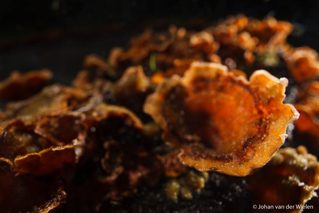 Rechterflits schuin achter de paddenstoel voor tegenlicht effect