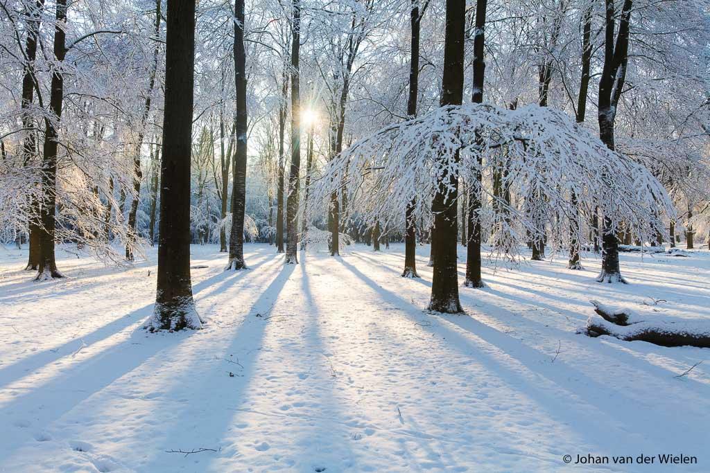 de zon straalt door het besneeuwde beukenbos