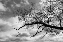 Silhouet omgevallen dode boom. Fotograaf: Sipko de Schiffart