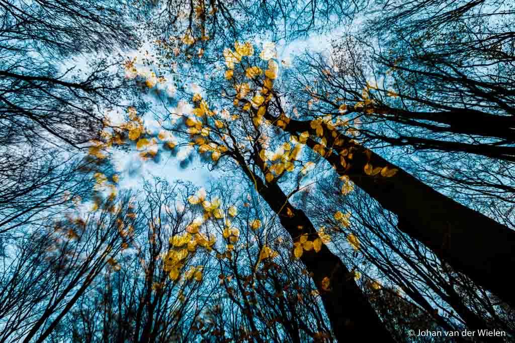 24 nov. 2013, herfstimpressie, combinatie van blauwe uurtje, flitslicht, lange sluitertijd en - geluk! - een harde windvlaag