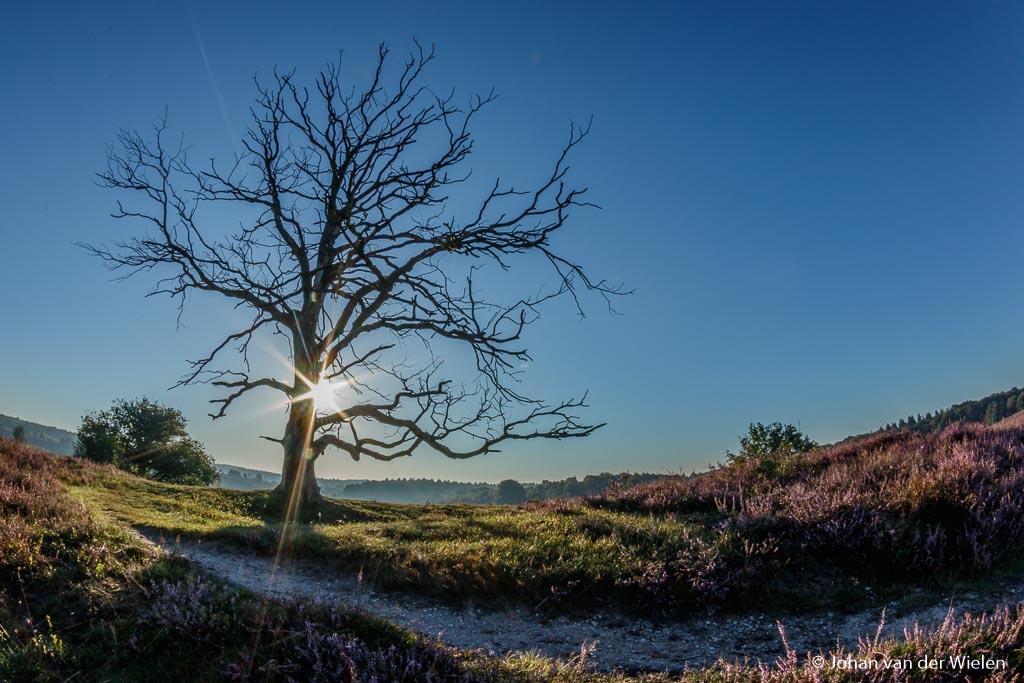 De zon net vanachter de boom laten 'sneaken' in combinatie met een hoog diafragmagetal (f/22) waardoor de zon gaat stralen. De extreme groothoek komt door gebruik van een fisheye lens.