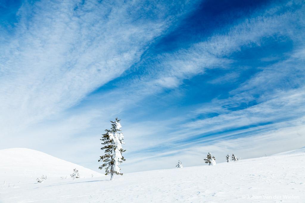 sneeuw en blauwe lucht, het ultieme gevoel van kou en winter!