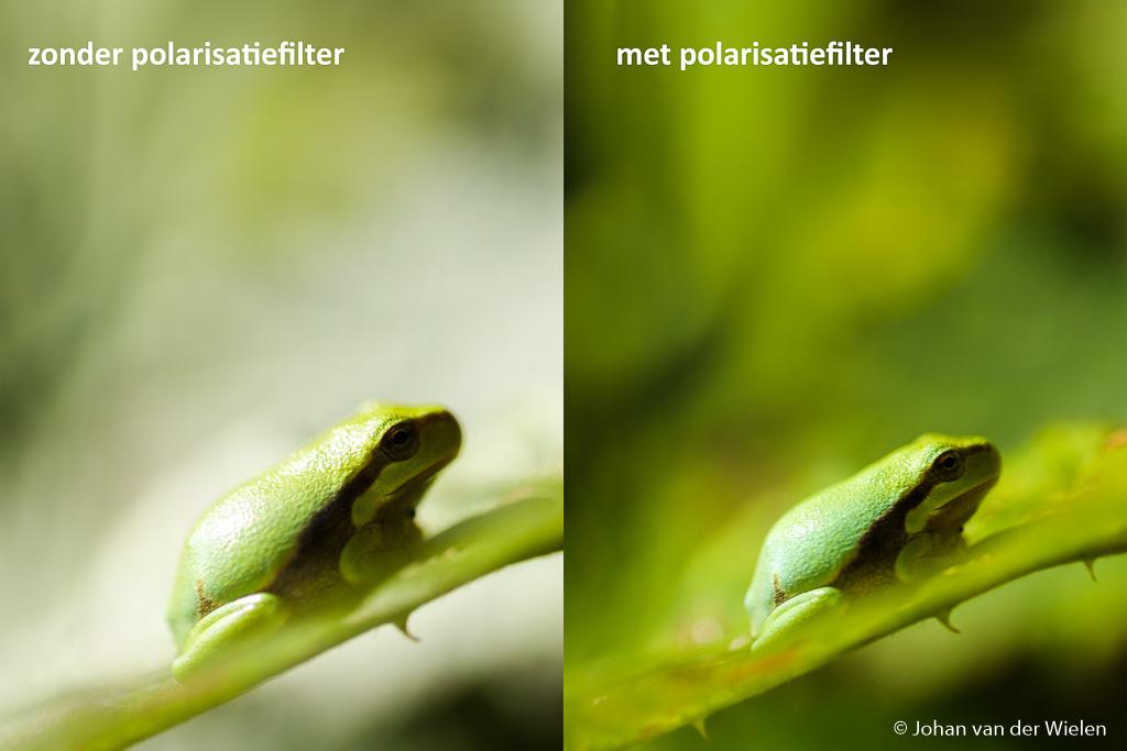Ook bij macro heeft deze filter een grote meerwaarde zoals hier bij de boomkikkers. het zonlicht komt van links