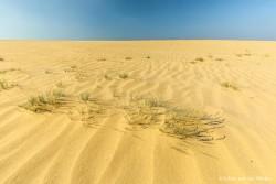 Ultiem woestijn gevoel, het gele zand en een diep blauwe lucht. Nationaal Park Hoge Veluwe