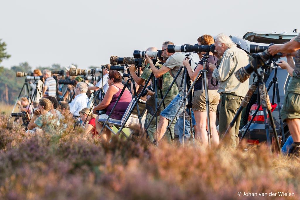 Als je op de wildbaan gaat staan sta je niet alleen. Maar laat je niet afschrikken door de vele fotografen of hun dure apparatuur. Want ook met beperkte materialen kun je hier prachtige beelden maken!