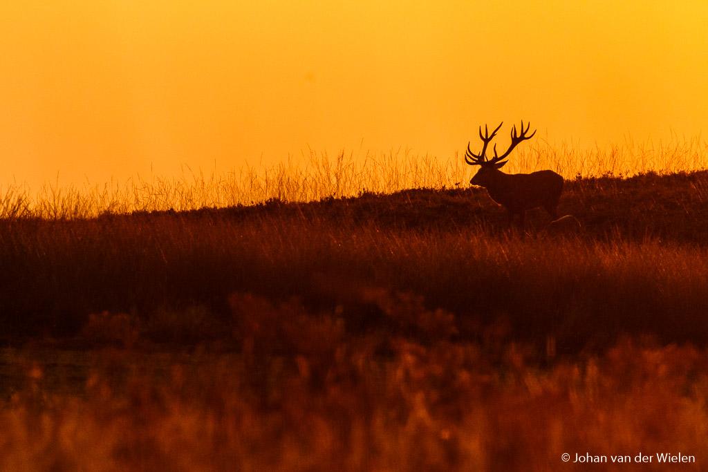 De zon is bijna onder… zou hij nog een keer op de heuvel willen staan als silhouet?