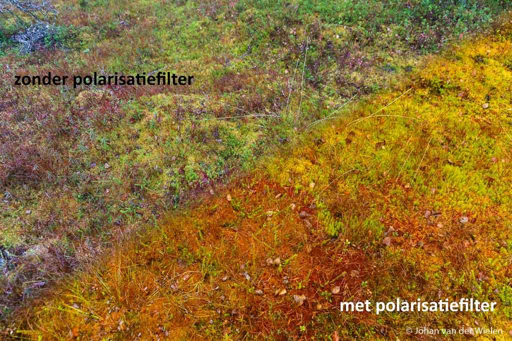 Effect van de polarisatiefilter op vochtige bodem, let op het kleurverschil en kleurcontrasten