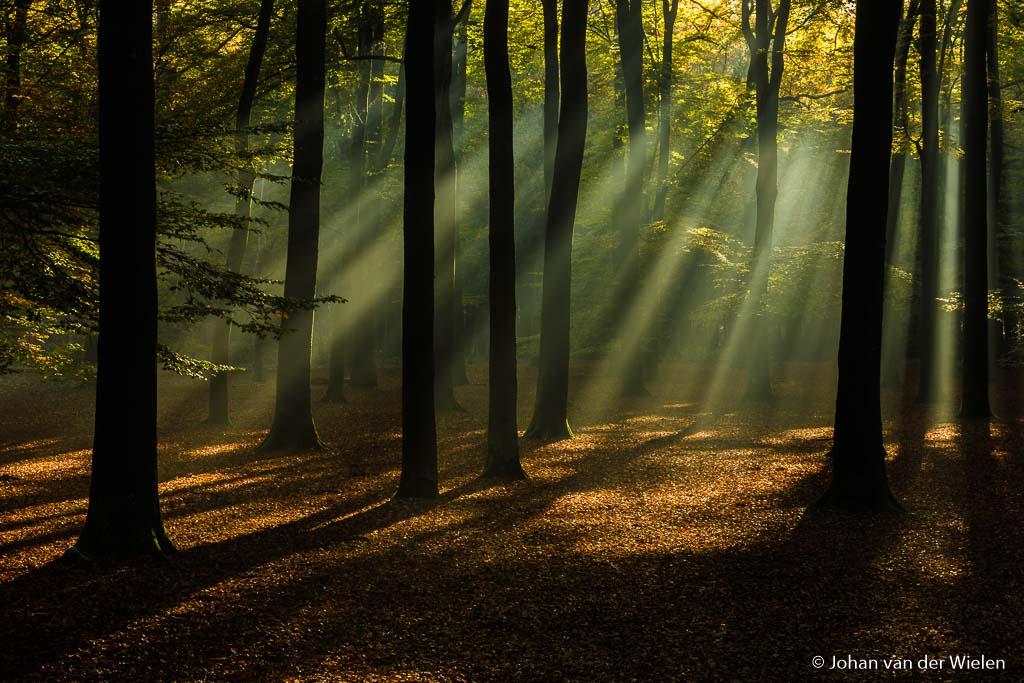 Om de magische sfeer van zonneharpen extra te benadrukken belicht ik vaak iets onder