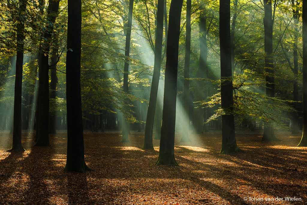 Daar zijn de stralen! Alsof er een spot uit de hemel door het bos heen priemt