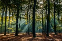 De lucht zit in het beeld maar wordt tegengehouden door de boomkruin, het stralende zonnetje breekt de donkere bomen en geeft een speels effect