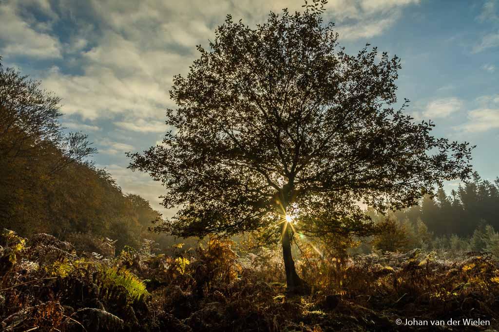 De eerste zonnestralen door een boompje op de open plek. Door het hoge diafragma getal (f/16) gaat hij leuk stralen door de takken.