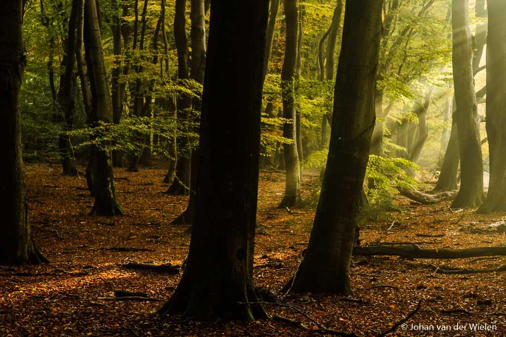 Naast de open plek begin de zon langzaam ook het bos binnen te dringen…