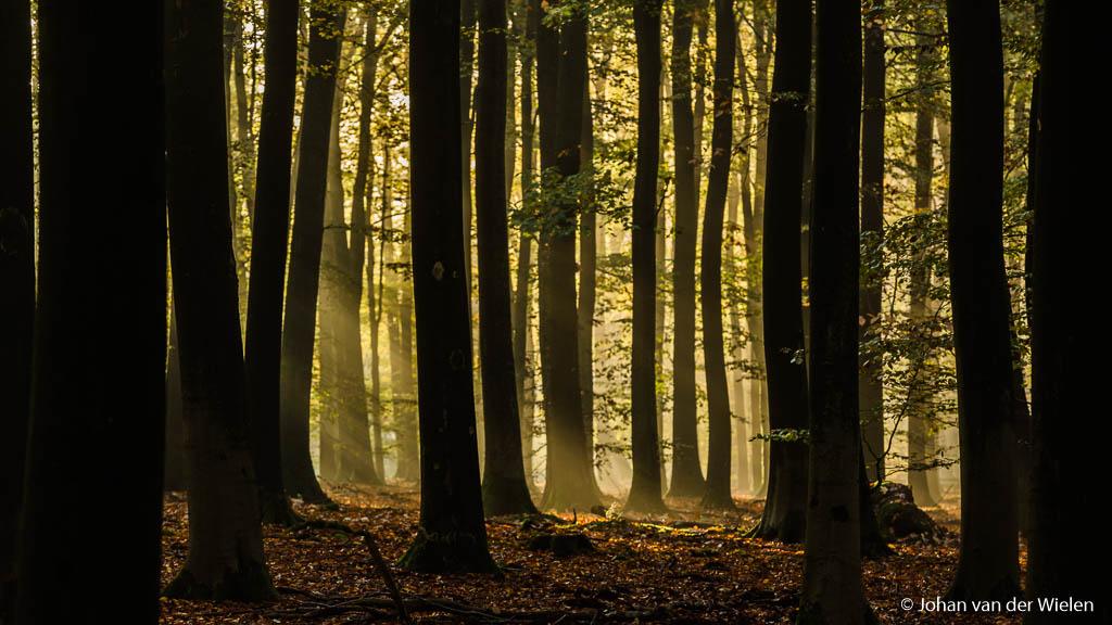 Het donkere bos met in de verte…. Het licht! Gemaakt met telelens, ca. 200mm