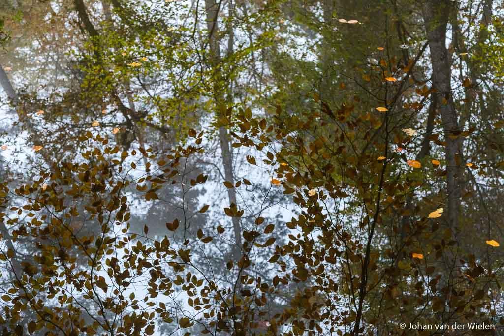 De beek stroom zó weinig dat je kan spelen met reflecties en vallend herfstblad