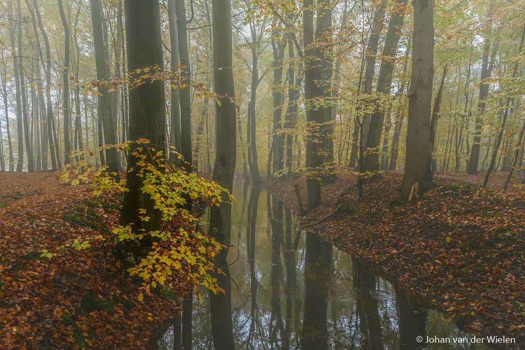 Verstilde serene herfstsfeer met mist en diep verzadigde kleuren… maar stromen ho maar