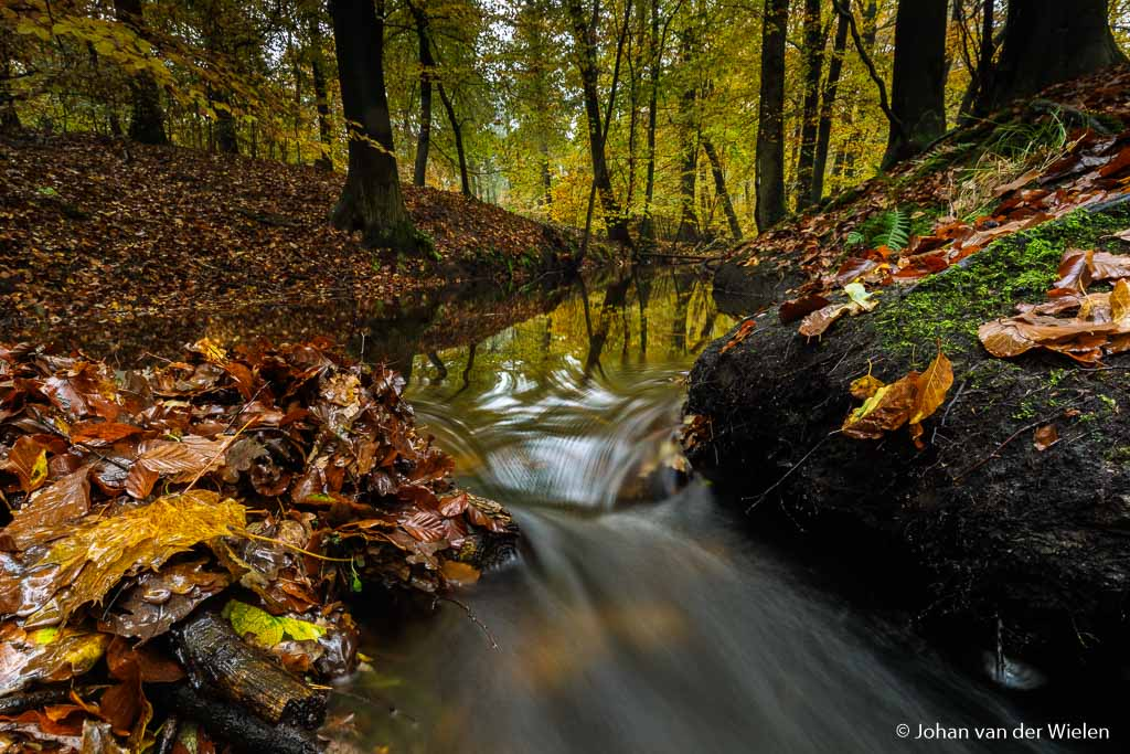 Geen polarisatiefilter gebruikt, de kleur van de foto is wat koel, je ziet de lichtreflectie in het water en al het natte blad glimt.