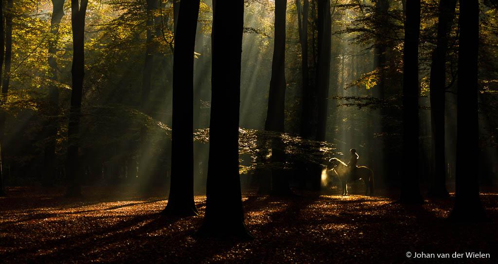 Sfeer, licht en onderwerp... alles komt samen