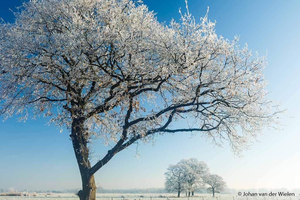Witte rijp en intense blauwe lucht… dé ingrediënten voor het ijskoude gevoel van de winter.