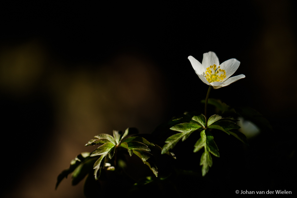 Veel grotere afstand, niet alleen de bloem is nu scherp maar ook alle blaadjes van het plantje
