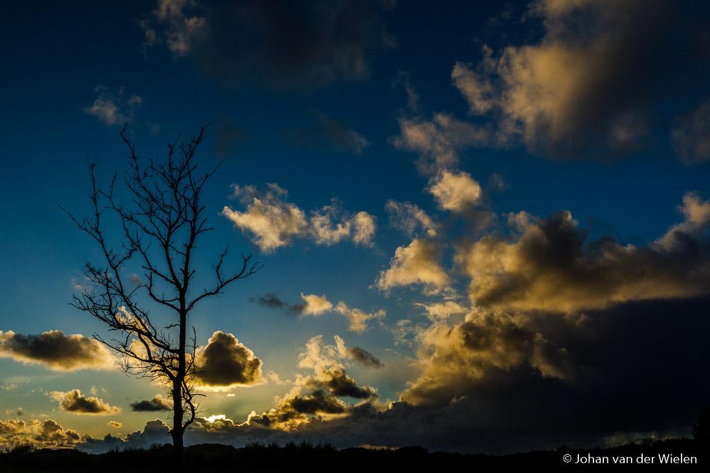 De zon is nog niet eens onder als ik onderweg naar zee stop bij deze boom