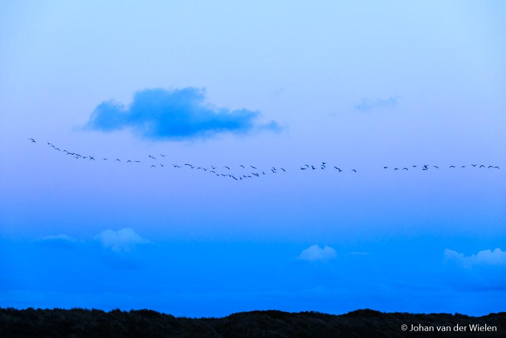 De aardschaduw mooi zichtbaar met precies in elke band mooie wolkjes... als dan ook nog eens een groep ganzen precies goed door het beeld wil vliegen ben je spekkoper