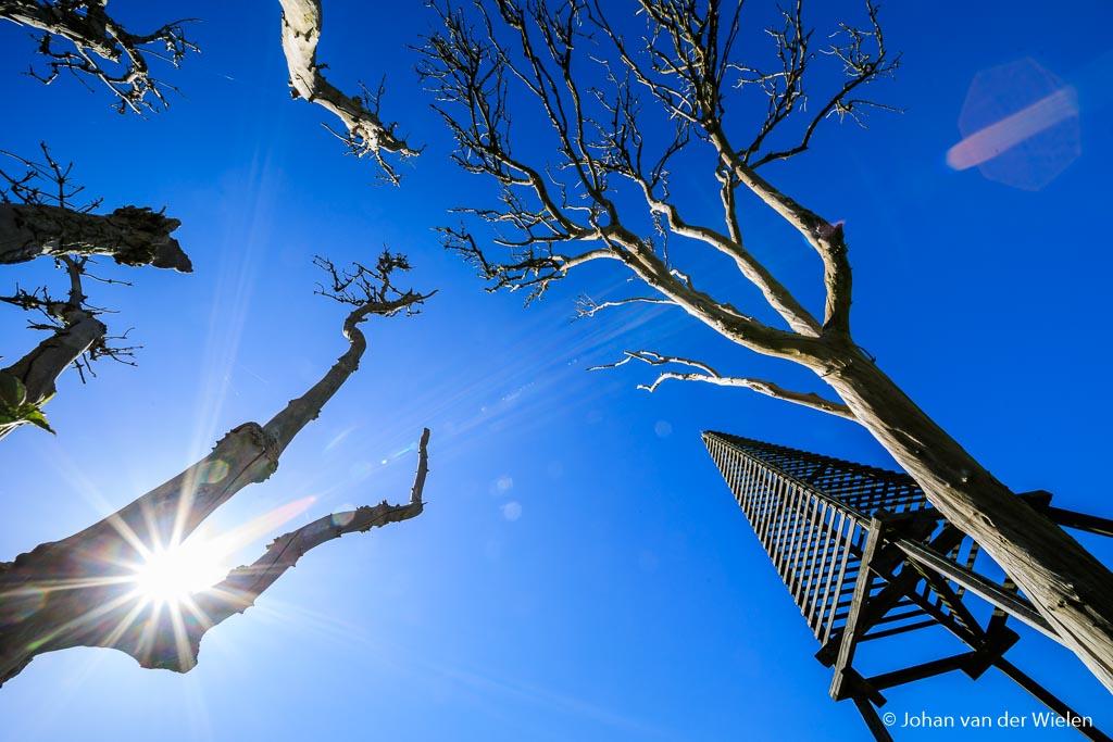 De zon 'sneakt' door de bomen het baken van Schiermonnikoog. Met f/22 krijg je dan dat de zon gaat stralen (diffractie). De flare is zeker zichtbaar in de vorm van kleurvlekken en stralen. Let ook op de rode flare rechtsboven.