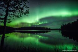 Herfstreis in Finland: knalgele berken, beren, dampende meren en... noorderlicht