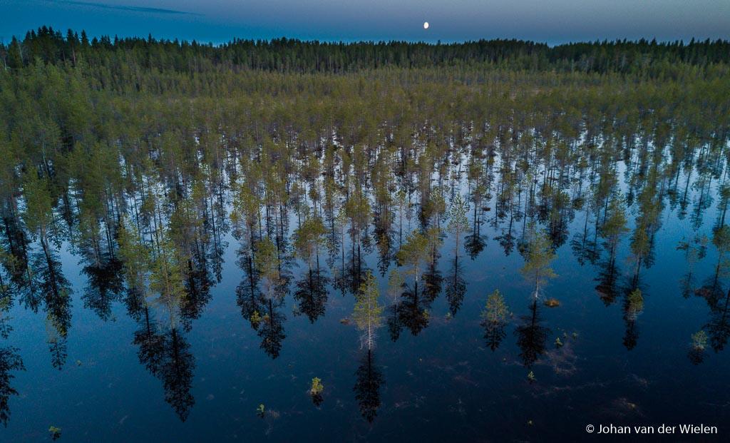 Verzopen bos door het hoge water van de rivier met de opkomende maan
