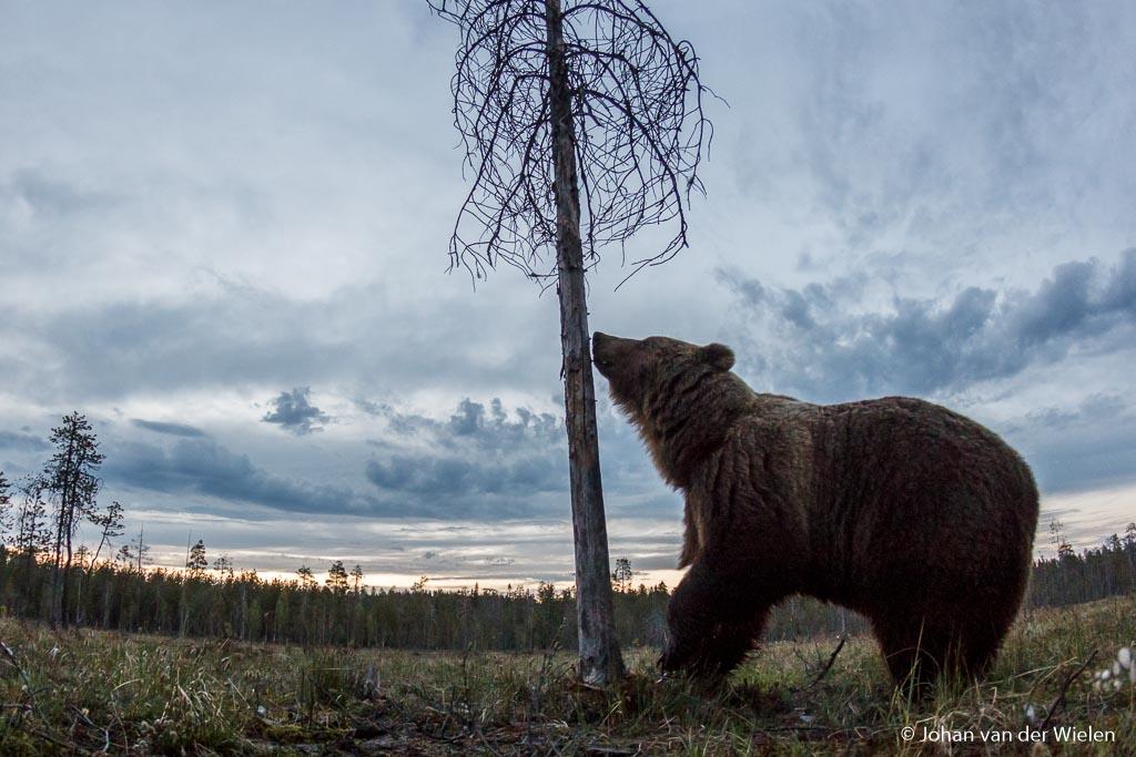 Eindelijk gelukt: groothoekopname van een beer