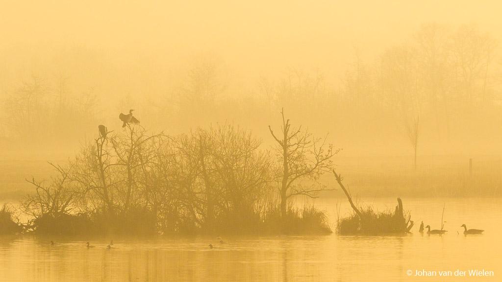Gouden uurtje in de ochtend met grondmist. De natuur komt tot leven.