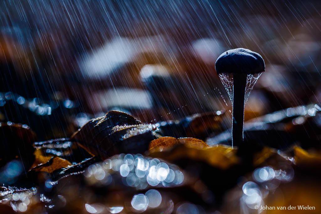 Soms heb je ook gewoon echte regen…de tegenlicht flitser doen dan de rest