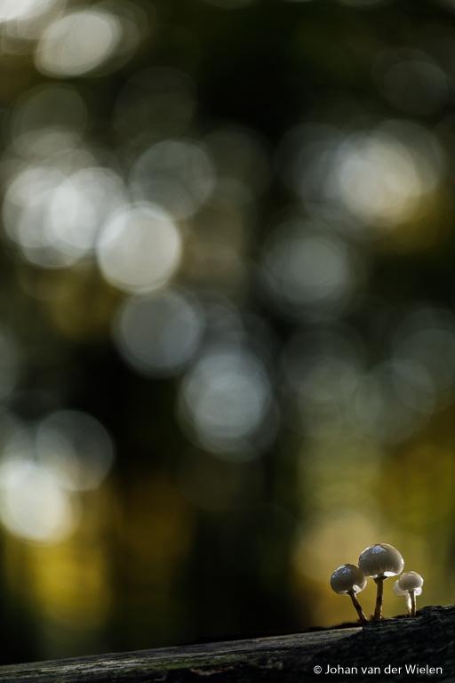 Zelfde foto maar nu met een klein lichtaccentje van rechts achter waardoor de zwammen ineens heel mooi oplichten