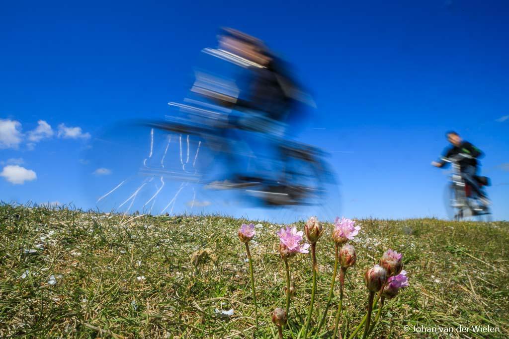 Waar de 'gewone mens' aan voorbij fietst, blijft de Floralist voor staan... plukken en in de vaas?
