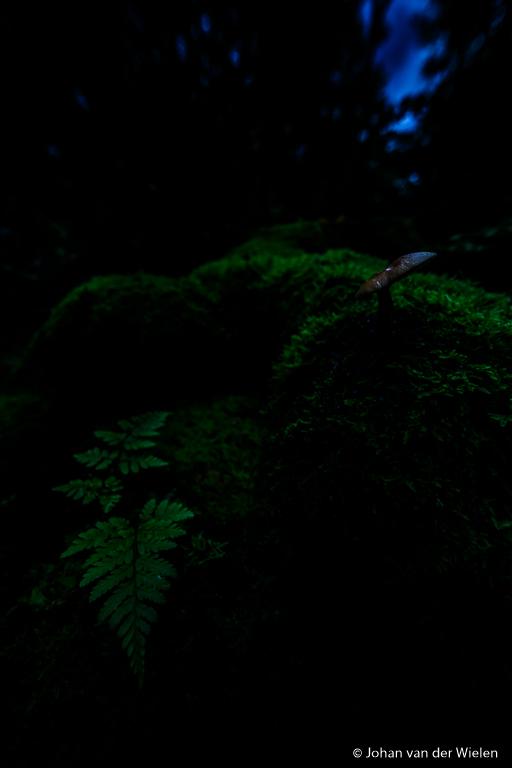 Eerste foto voor de omgevingsbelichting door de camera. Laowa 12mm f/2.8 lens met laowa filterhouder en een 0,9-hard grijsverloopfilter.