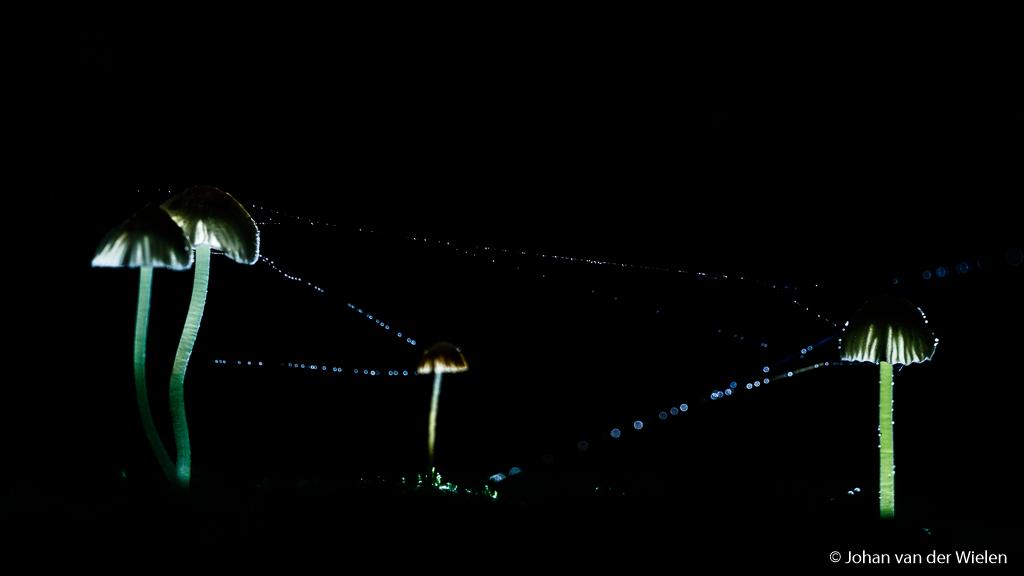 Het hoeft niet altijd te regenen tijdens de foto. Ik heb hier met de plantenspuit fijne druppels over de spinragdraadjes verneveld die later prachtig oplichten door de tegenlicht flits. Om een mooi egaal licht te krijgen heb ik een softboxje op de flits gezet.