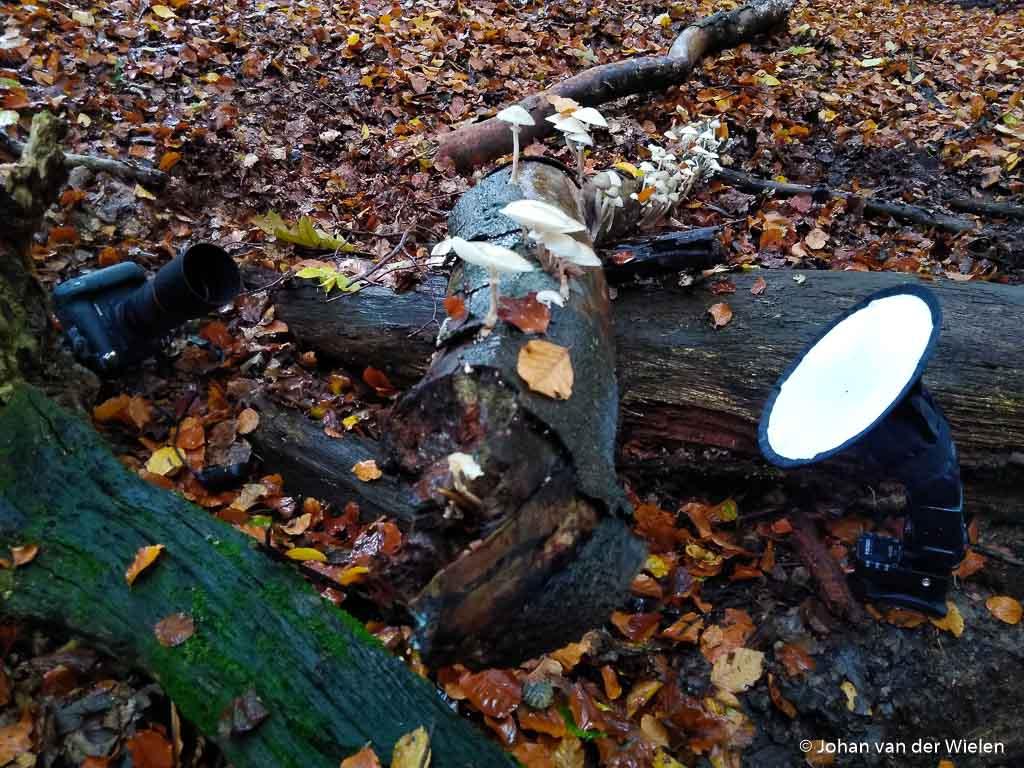 Opstelling in het veld bij porseleinzwammen: flitser draadloos met een ontvanger en een softbox voor een egale lichtval van achteren