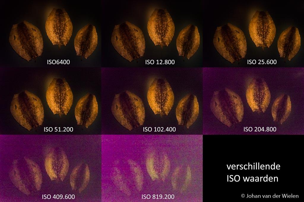 Vissenhuiden tegen zwarte wand in schaarsverlichtte ruimte