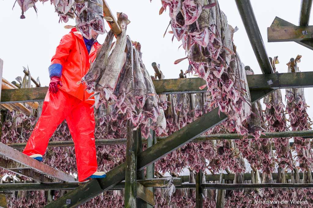 De kabeljauw op wordt opgehangen door mannen in oranje pakken, veelal gastarbeiders uit oost Europa. Gelukkig blijkt de Pentax Pk niet gevoelig voor … eeh… luchtjes
