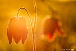 Tegenlicht tijdens het gouden uurtje, het warmste licht wat je maar kunt krijgen